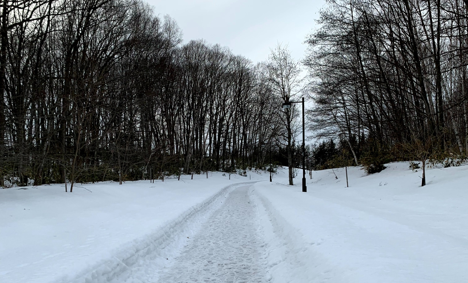 footpath in the woods covered in snow